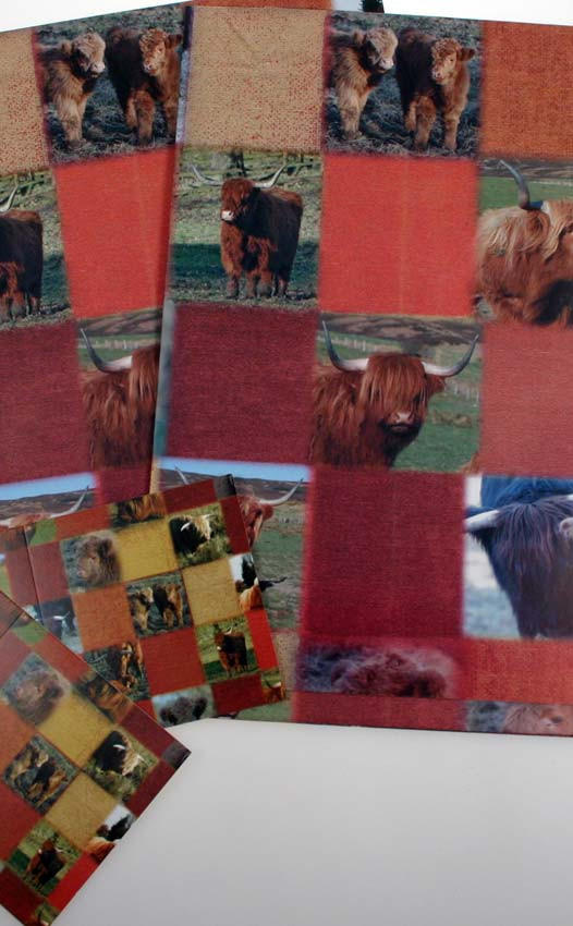 Colour: Highland Cow
